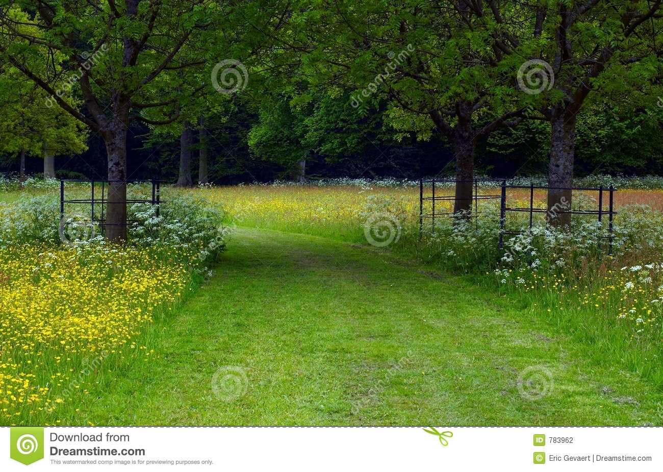 Path Between The Trees Stock Photography Image 783962