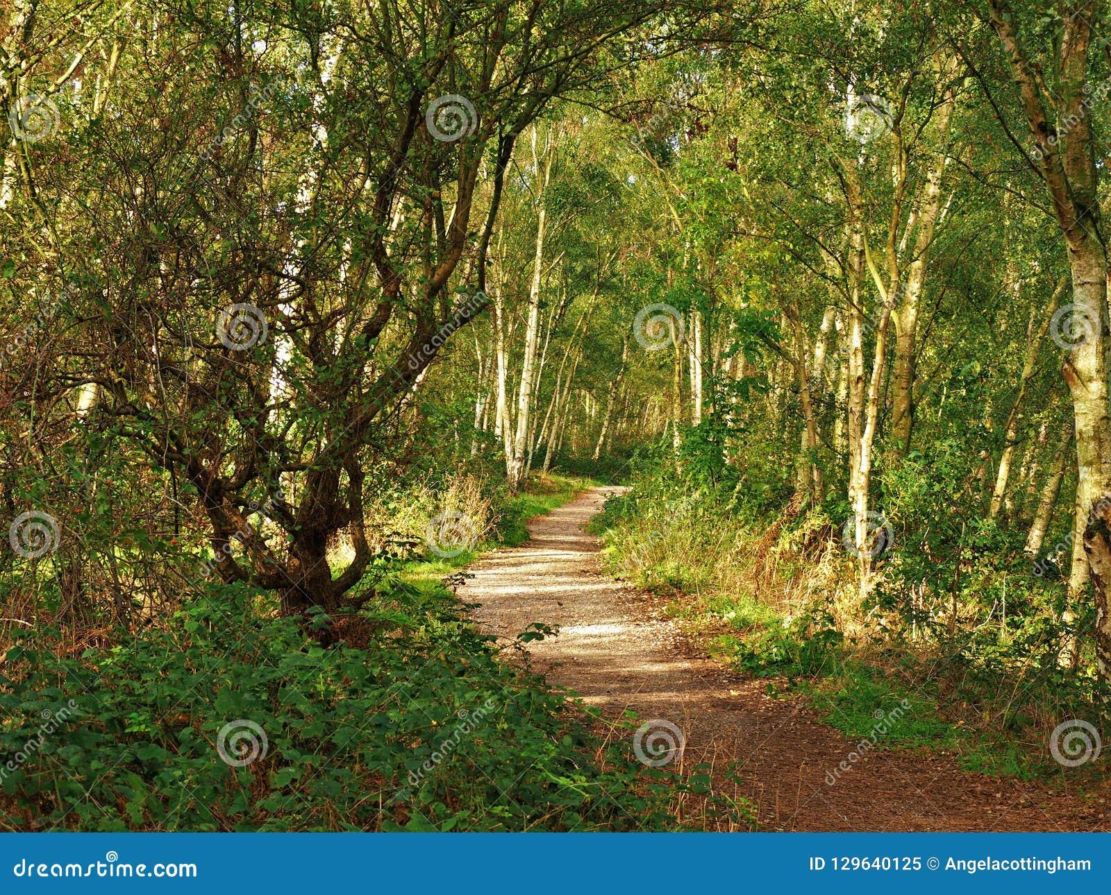 Path Through Trees At Fairburn Ings, Yorkshire, England