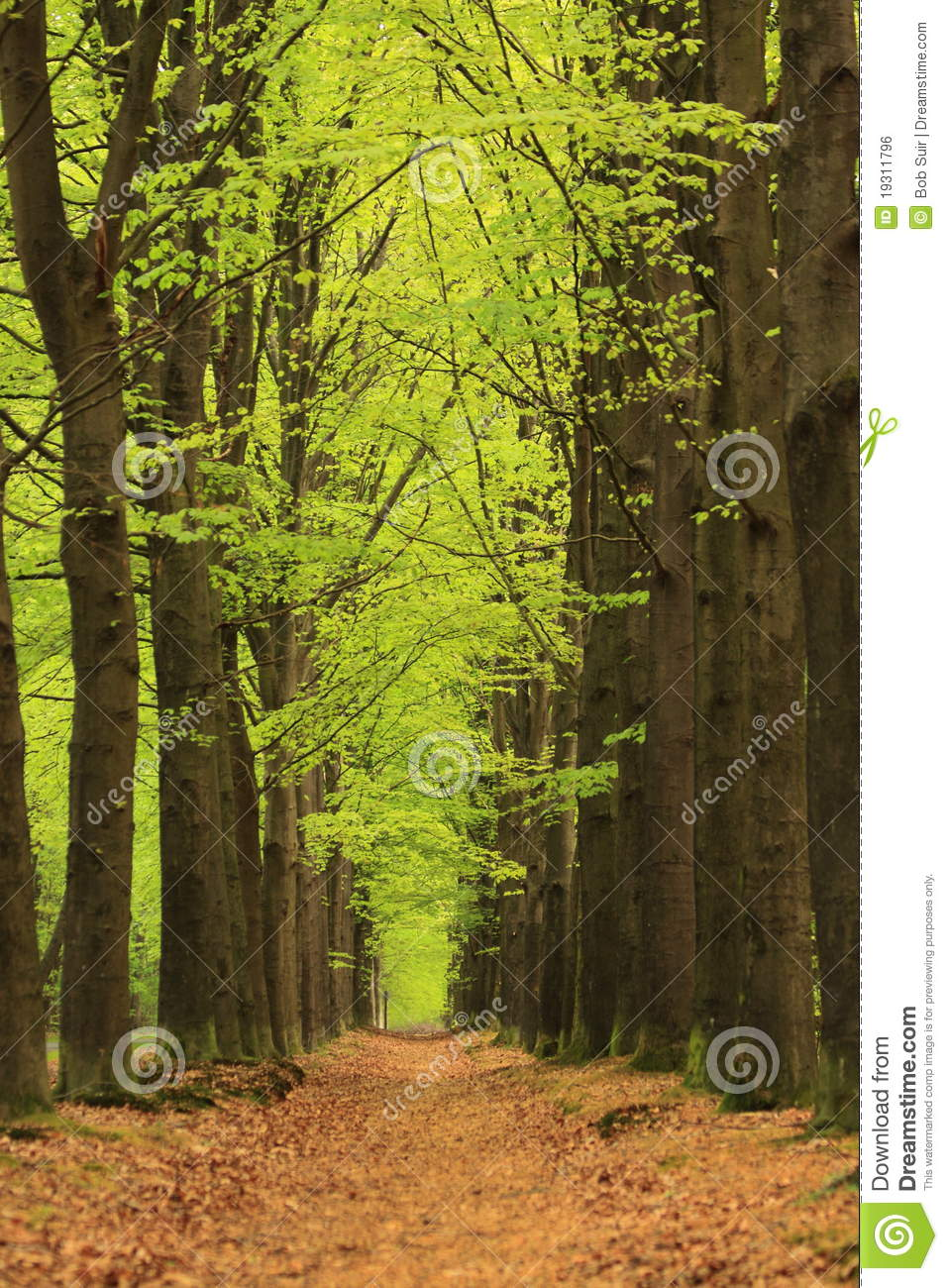 Path with trees with green spring leaves
