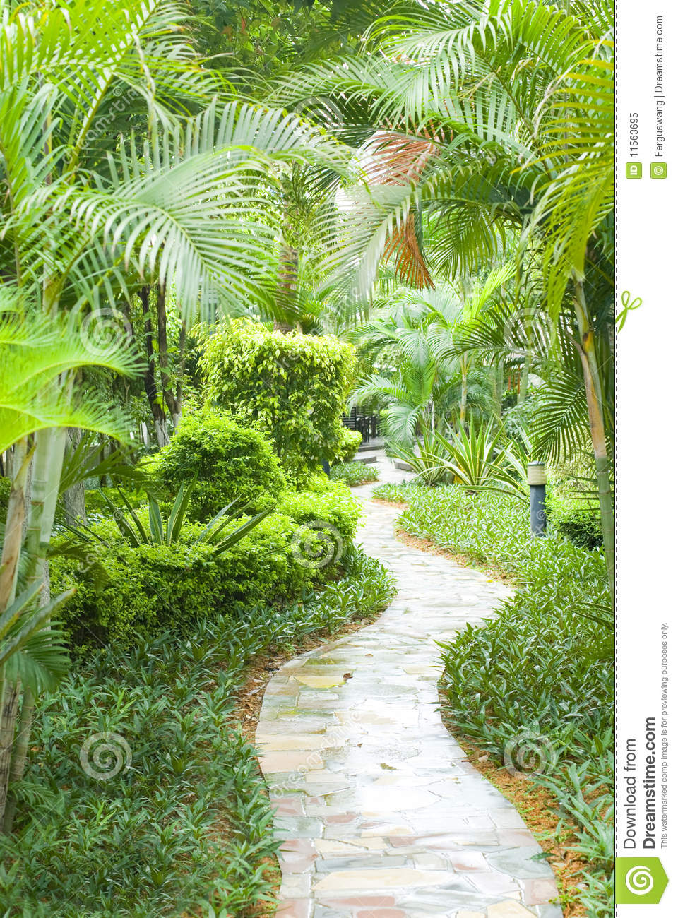 Path In Tropical Garden Royalty Free Stock Photo Image