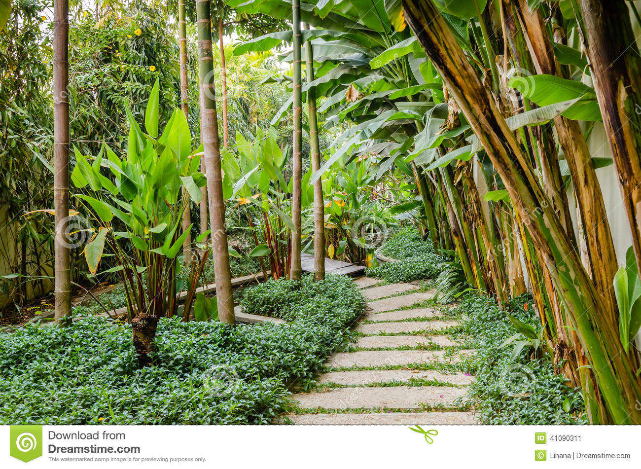 Path In A Tropical Garden Stock Image Image Of Natural