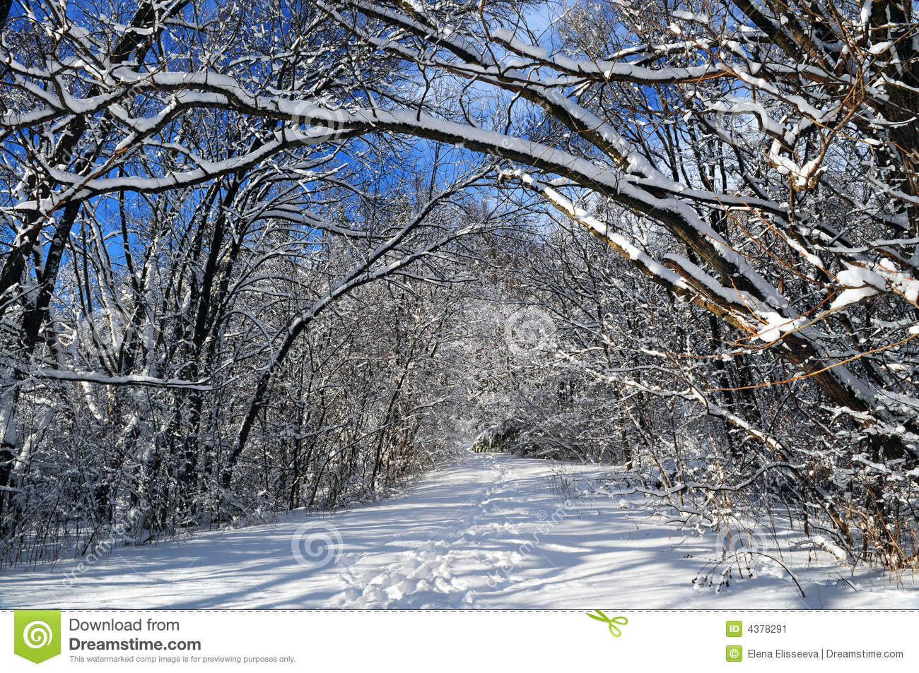Path in winter forest