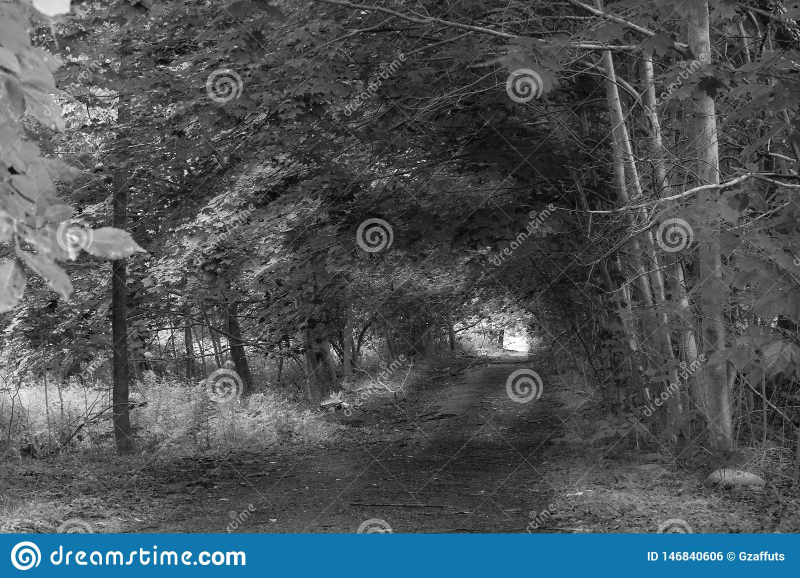Path through woods along dirt road with light at end