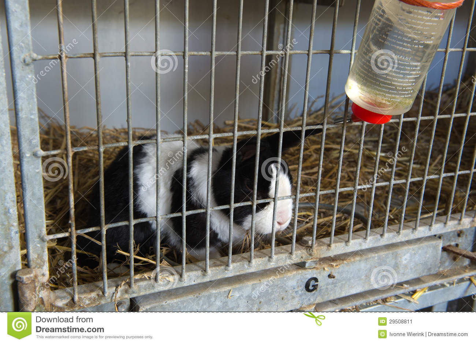 Pathetisch konijn in kooi