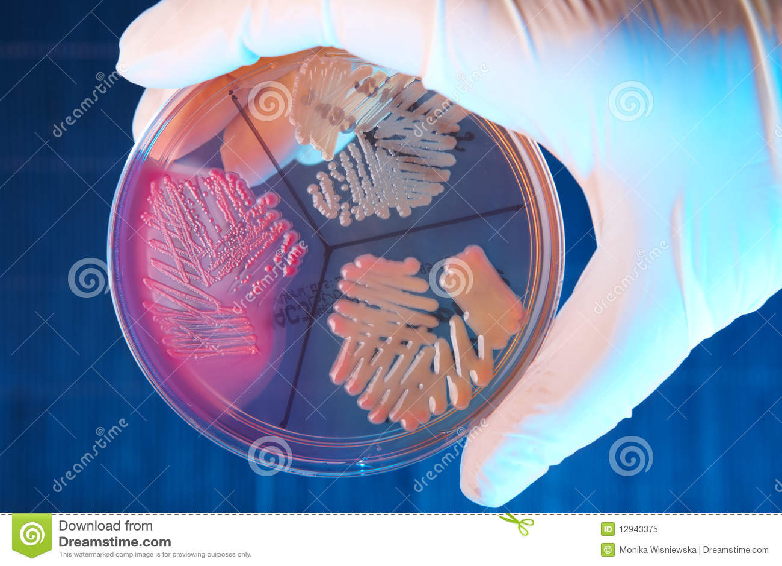 Pathological bacteria