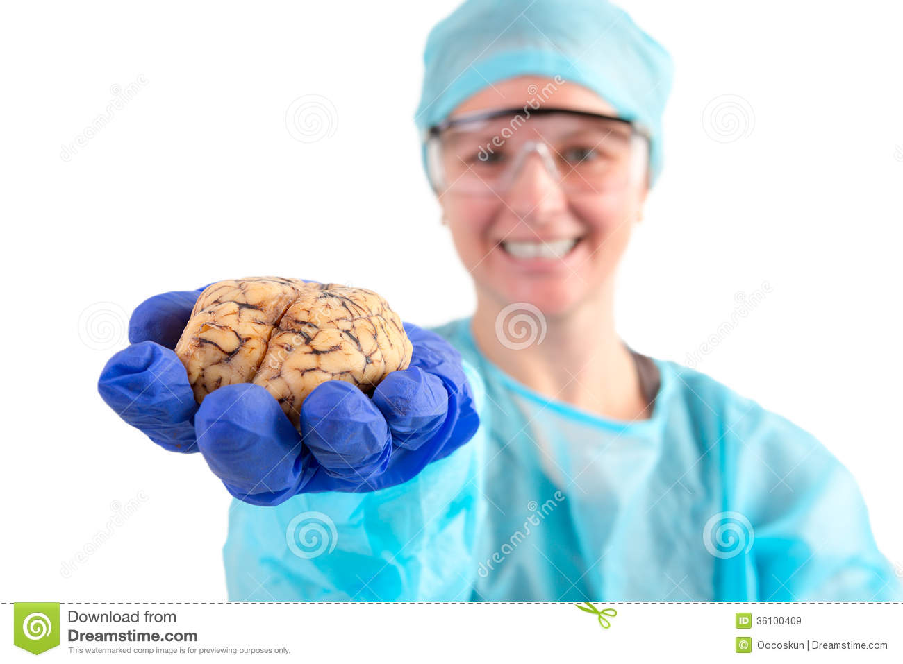 Pathologist Holding A Cow Brain In Her Hand Royalty Free Stock Images ...