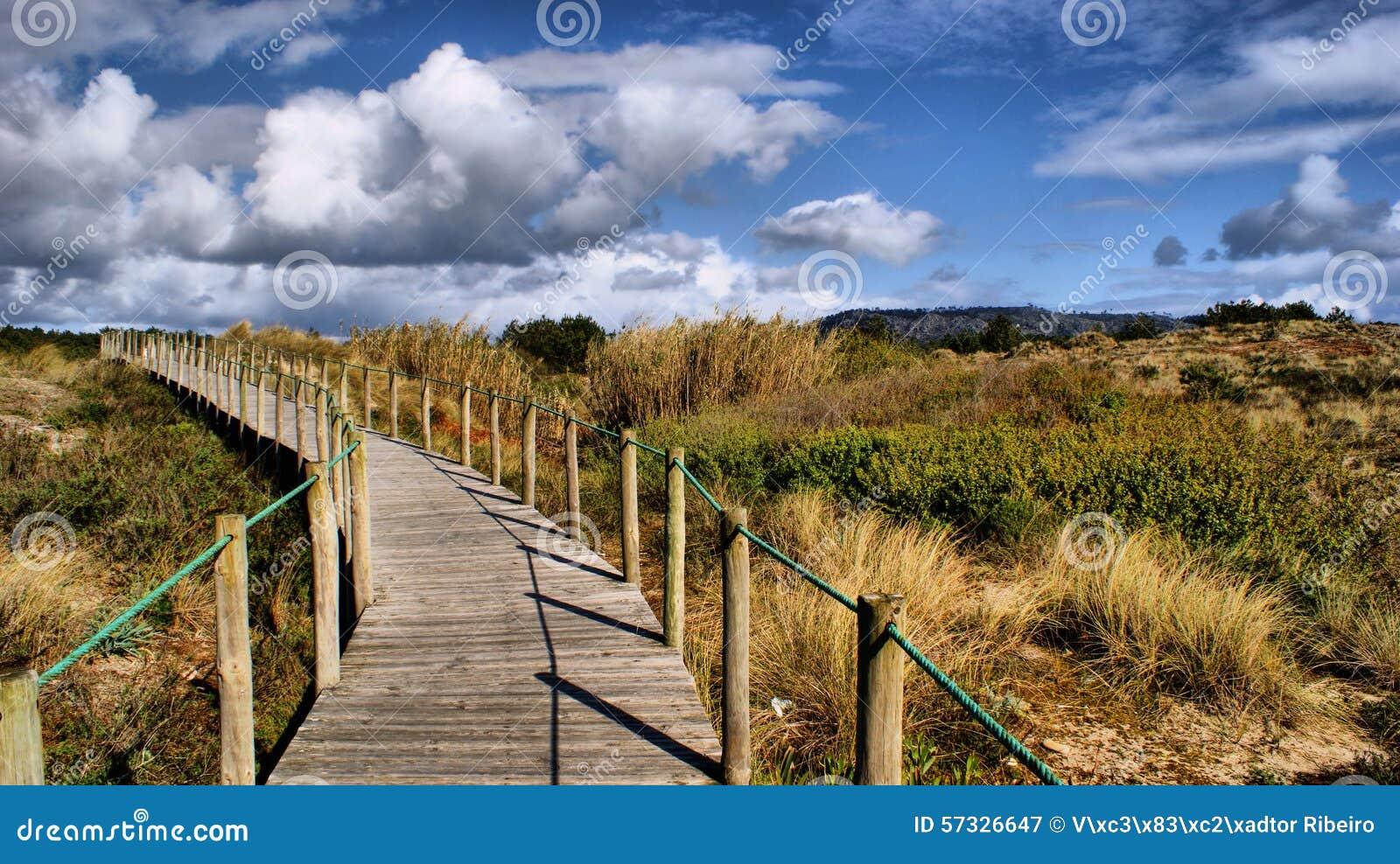 Paths on the beach