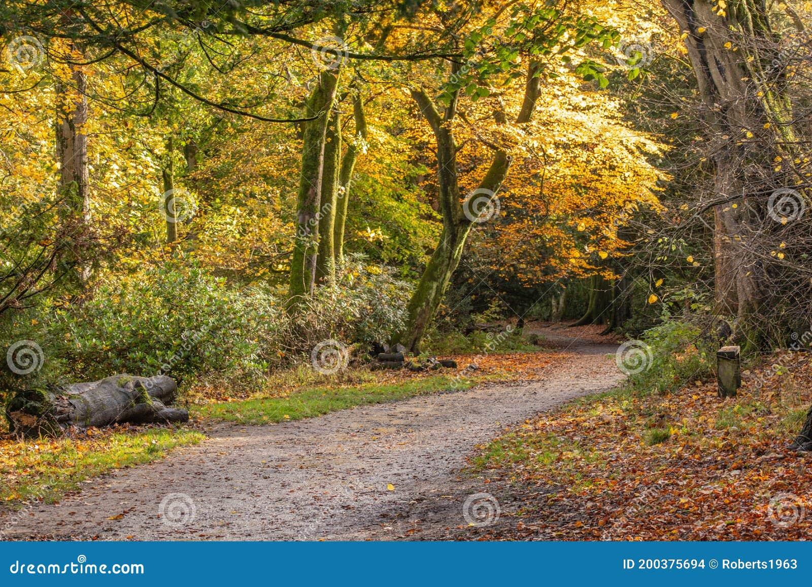 Pathway Through The Autumn Forest Stock Photo Image Of Foliage Tree 200375694