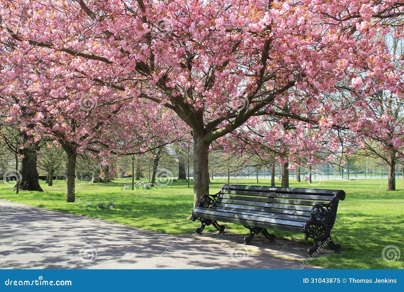 blossom park tree pink - photo #19