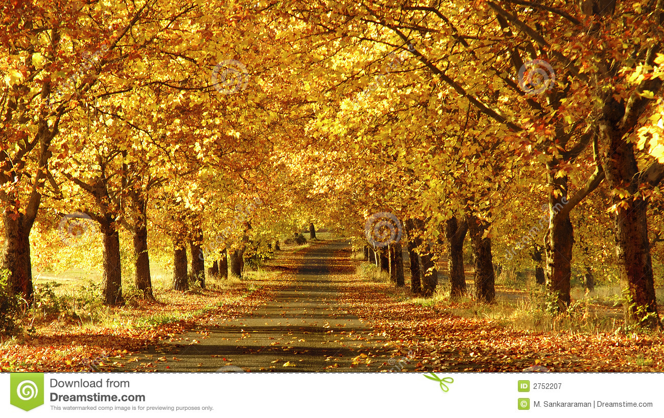 Royalty Free Photography Pathway in the Fall
