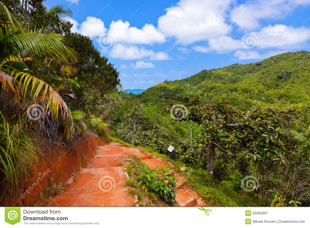 Pathway in jungle - Vallee de Mai - Seychelles