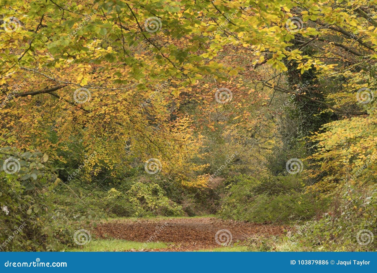 An autumn pathway on Southampton Common