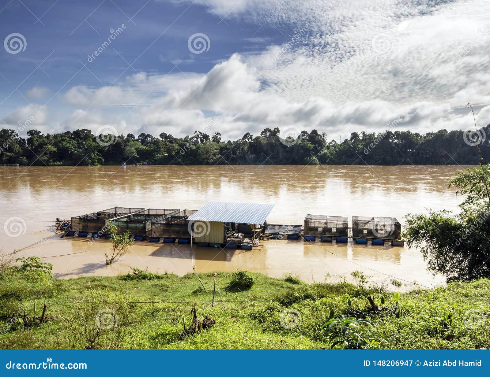 Patin fish cage breeding at a river
