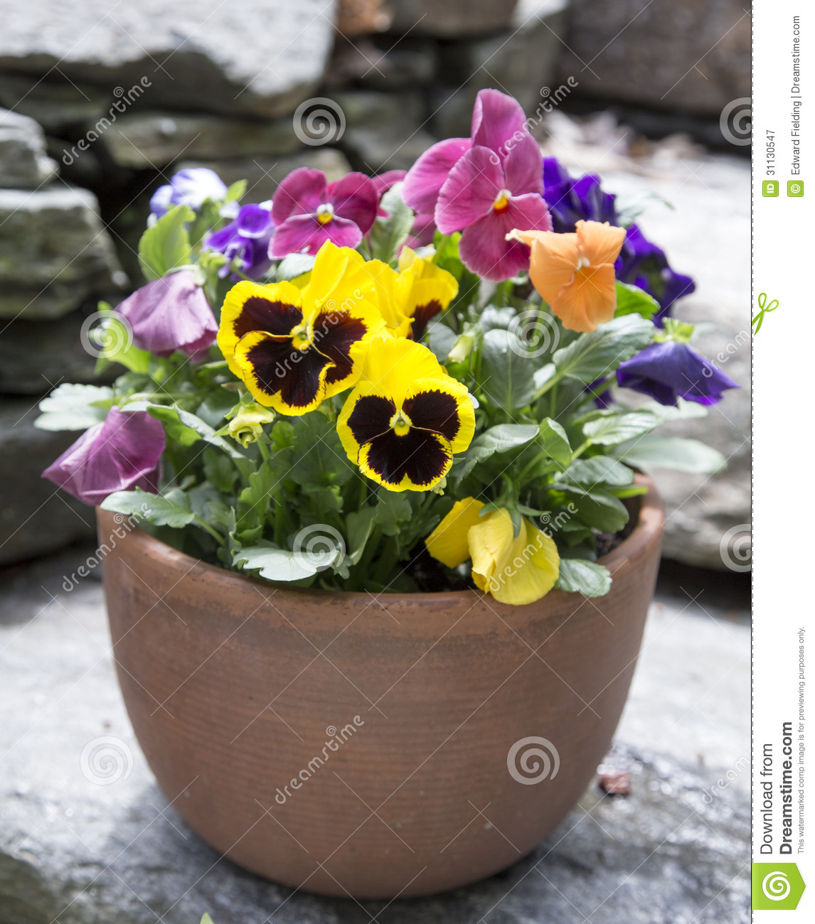 Patio Planter Of Pansy Flowers Stock Image Image Of