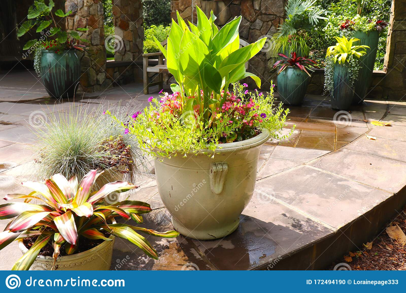 Patio Plants Say Spring Has Arrived Stock Photo Image Of Planting Colorful 172494190