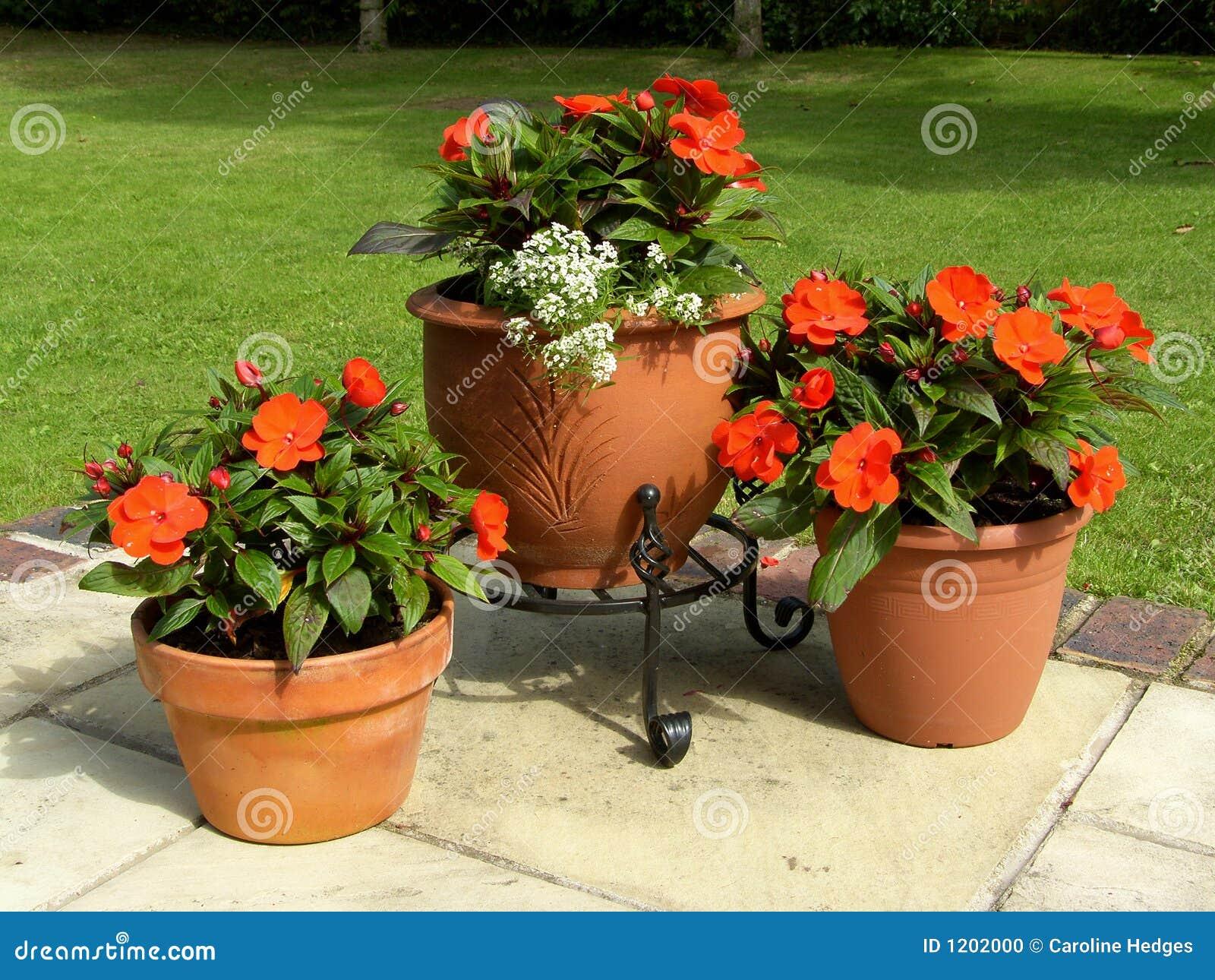 Awesome Patio Pots Stock Photo