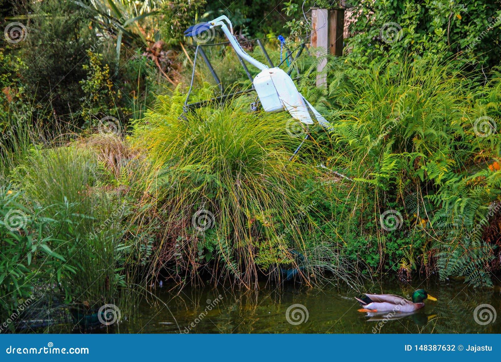 Pato en la charca rodeada por la alta hierba con la estatua del p?jaro