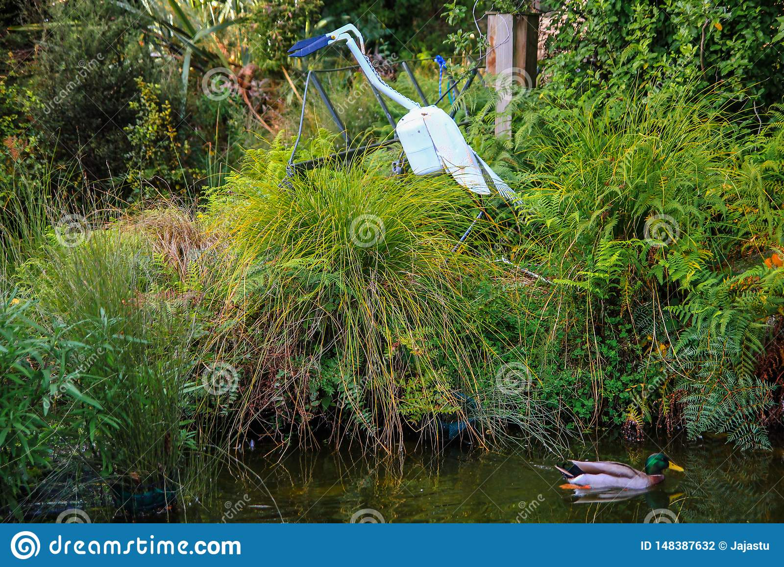 Pato na lagoa cercada pela grama alta com a est?tua do p?ssaro