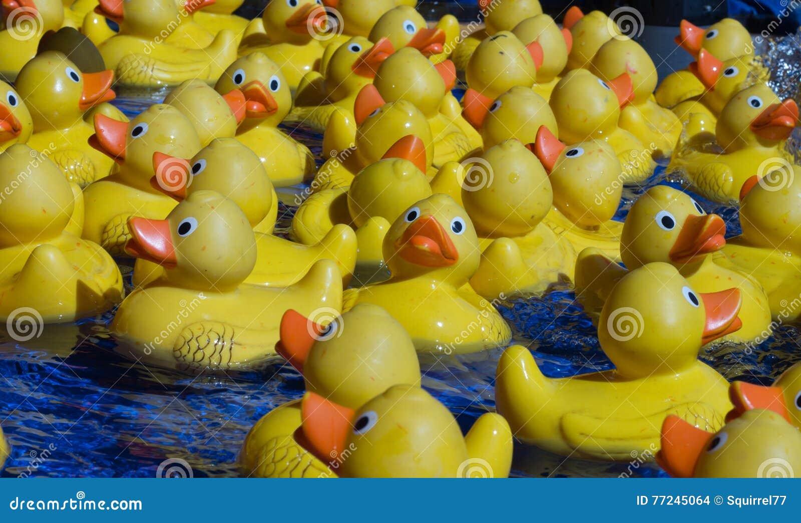 Patos Amarillos Del Juguete Del Grupo Que Flotan En El Agua Foto De Archivo Imagen De Agua Amarillo 77245064