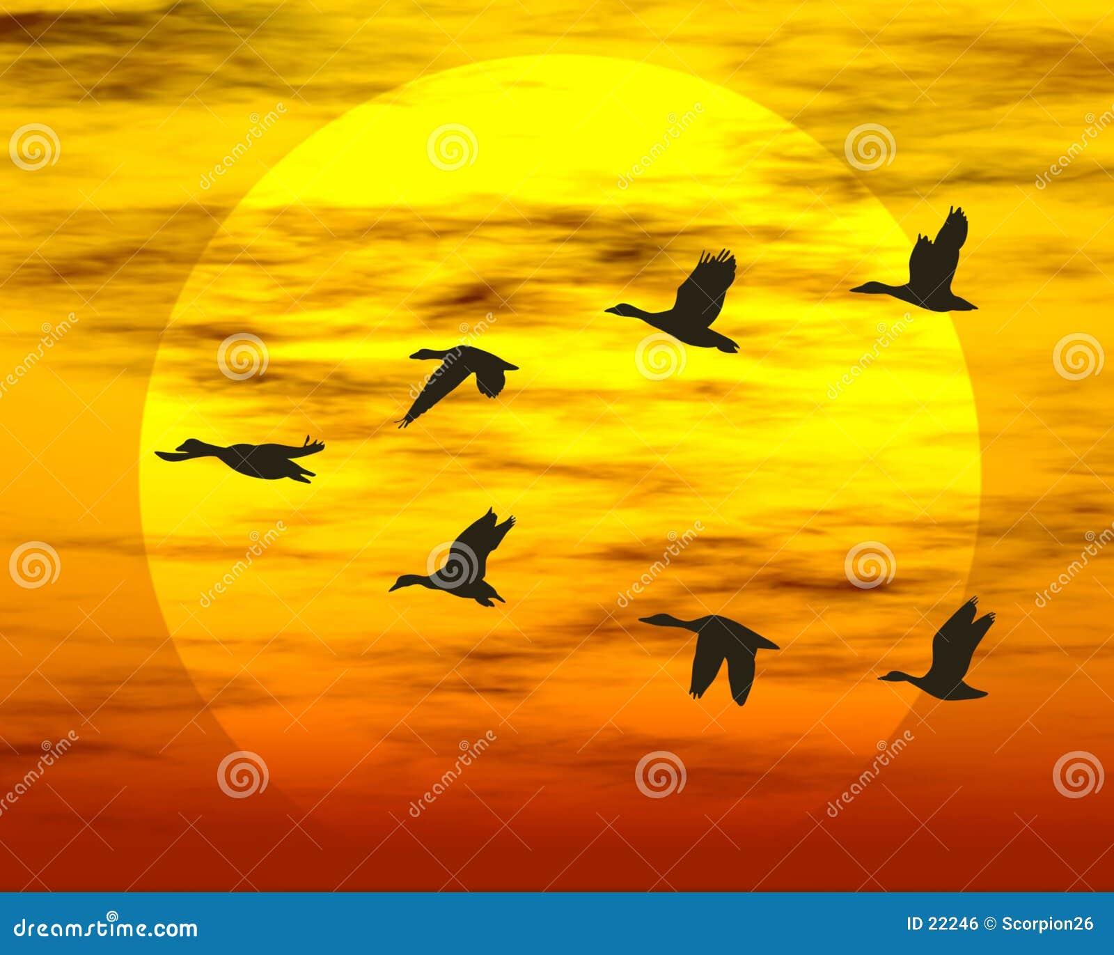 Patos del vuelo