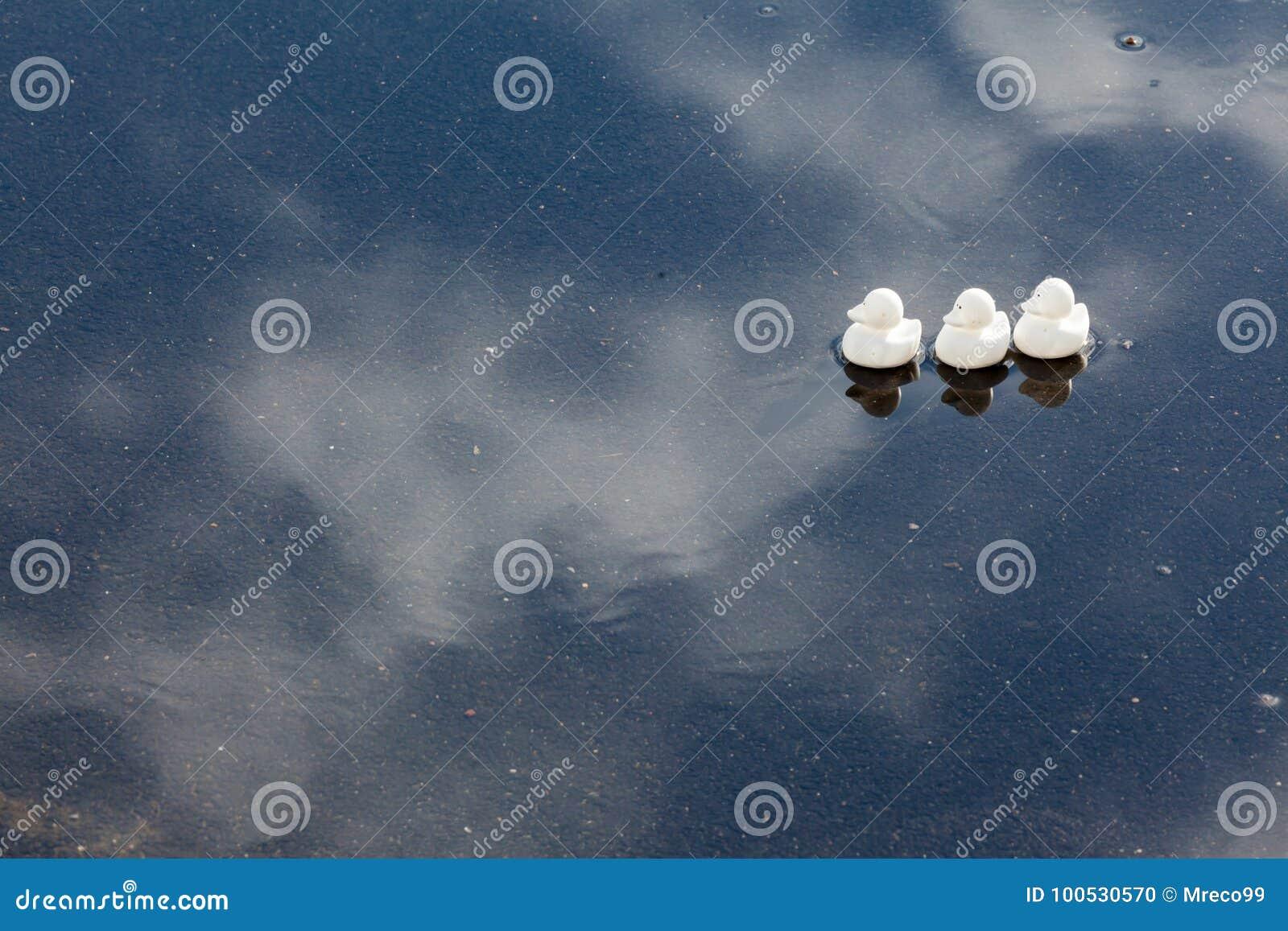 Patos en fila en un charco