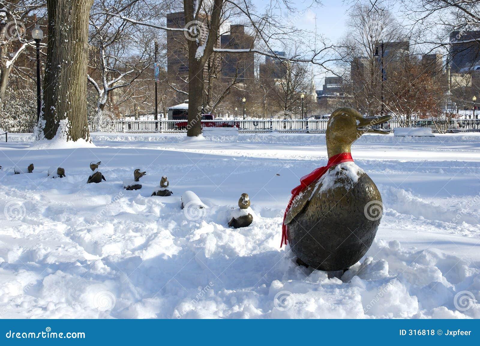 Patos na neve