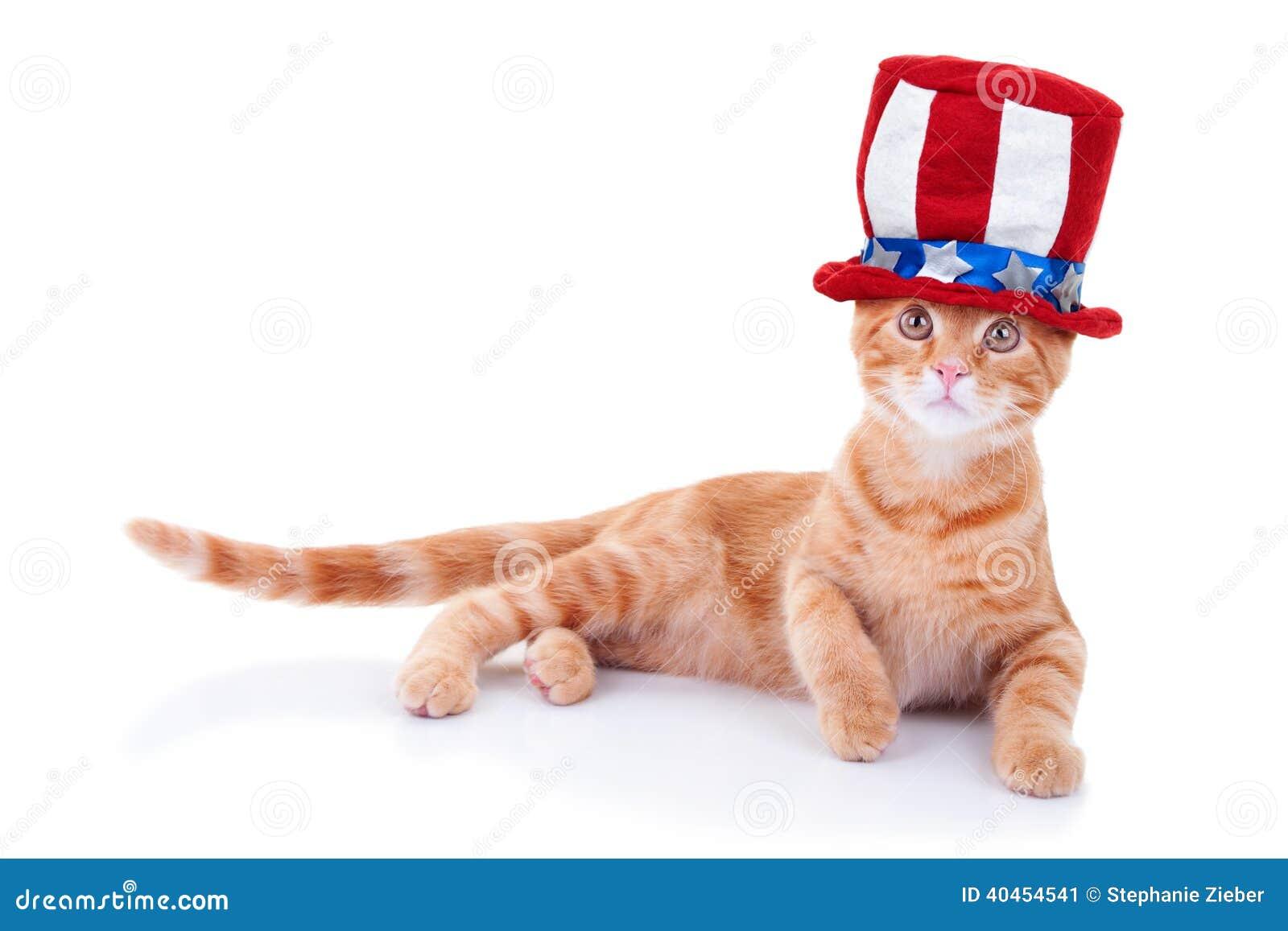 Patriotic Cat