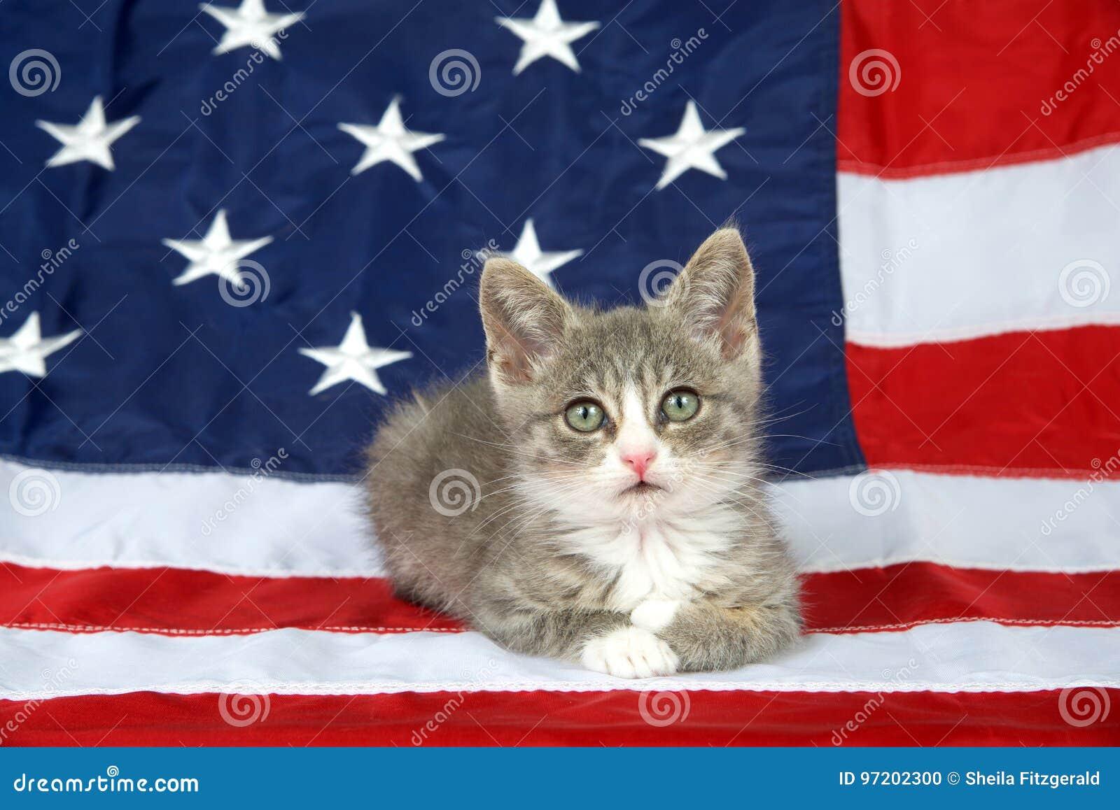 Patriotic tabby kitten on American flag