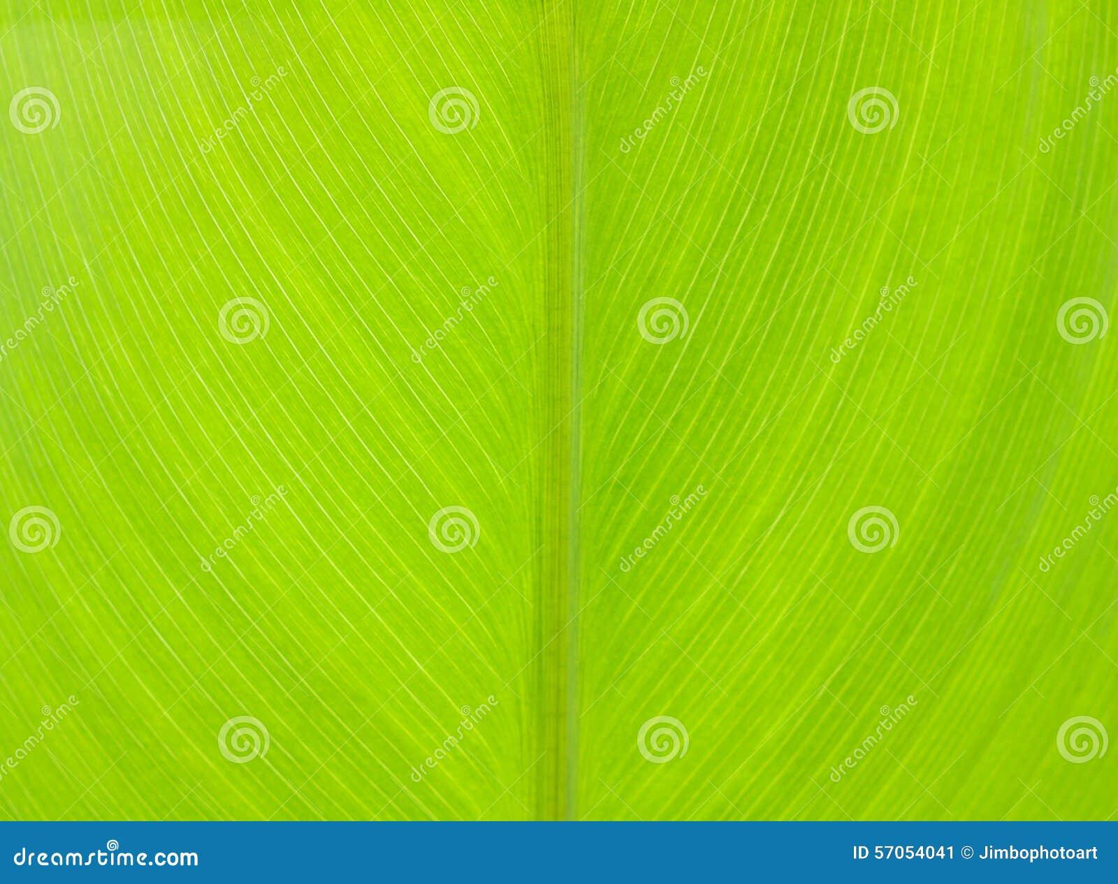 Patroon van groen blad