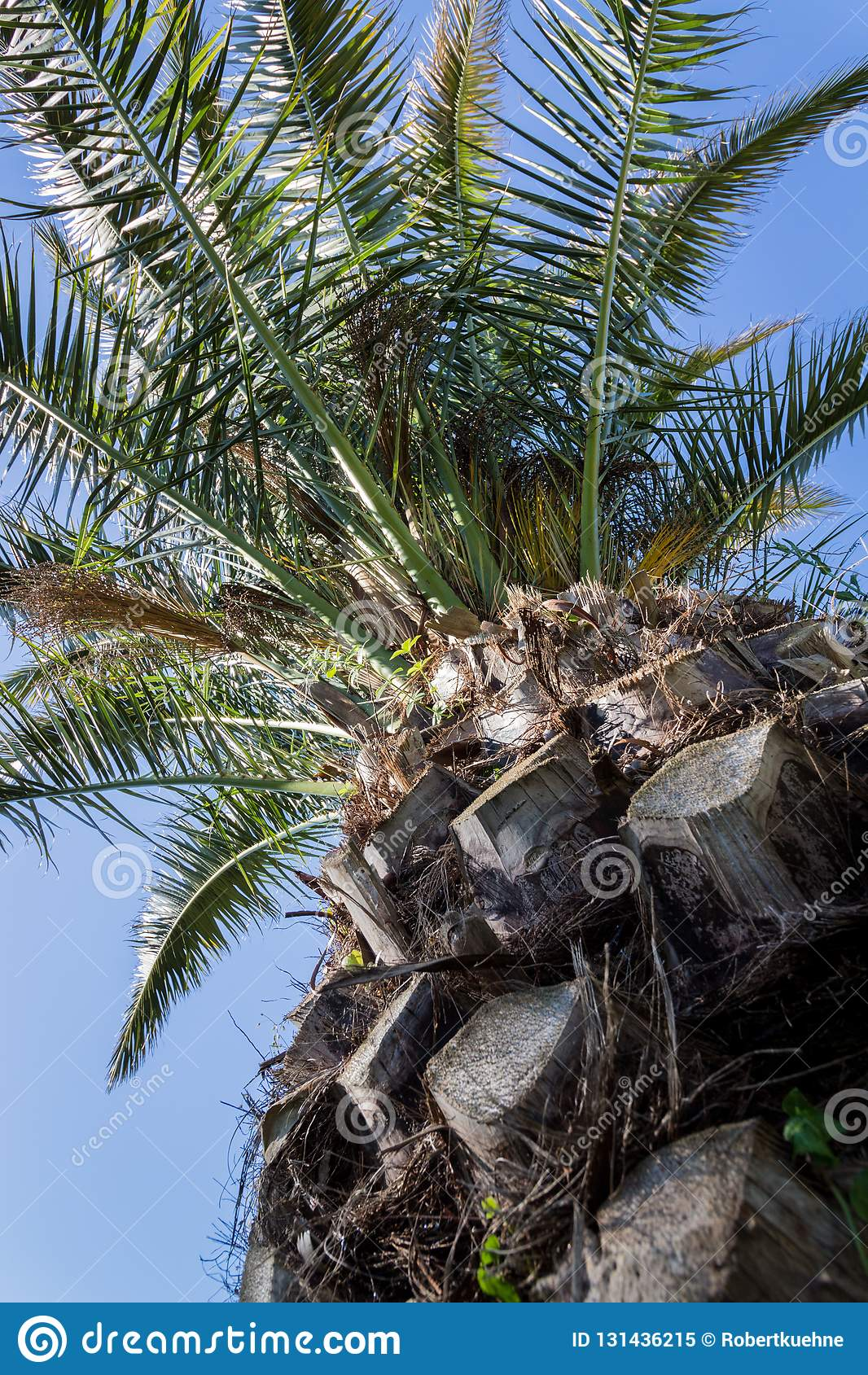 Patrzeć do drzewka palmowego