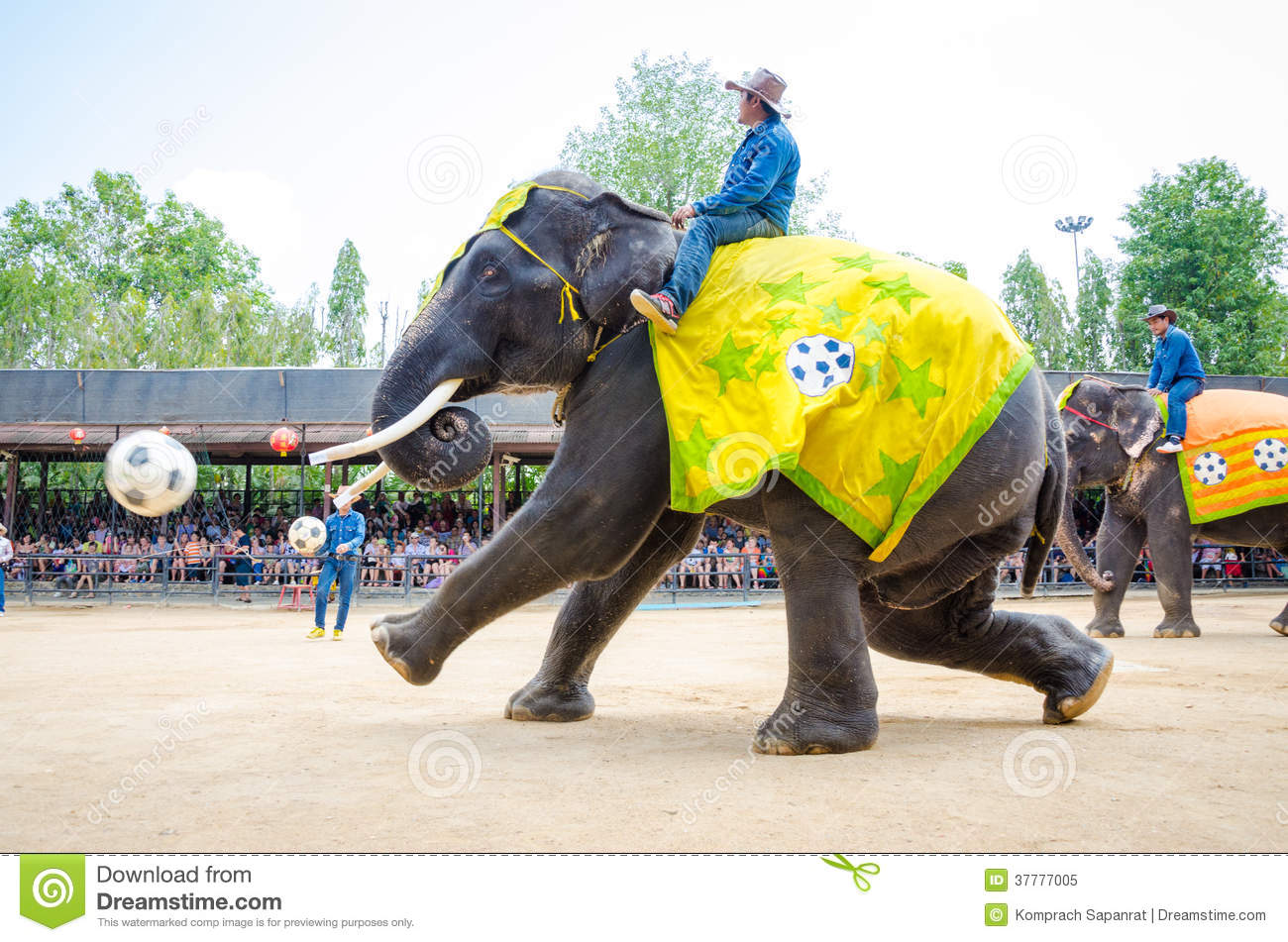 Pattaya, Thailand : Elephant playing football show.