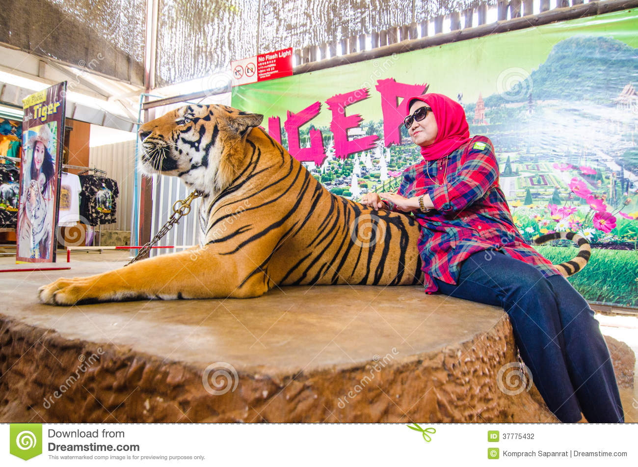 Pattaya thailand tiger show editorial photography - Show me a picture of the tiger ...