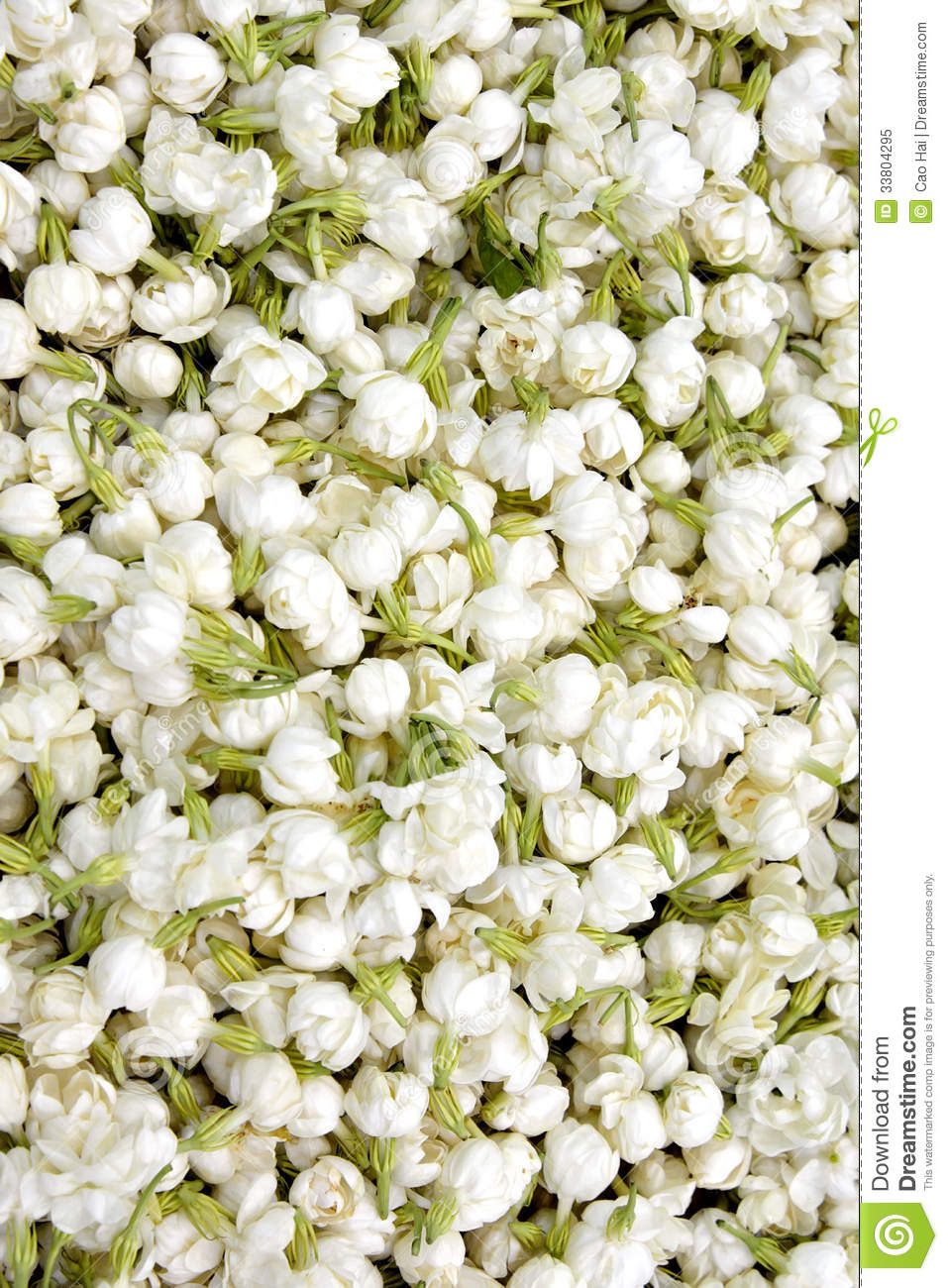 Pattern Of Jasmine Flower Stock Image Image Of Detail 33804295