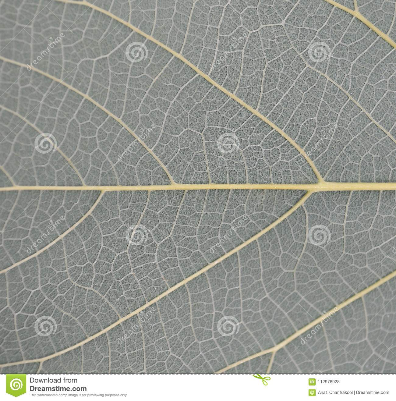 Pattern of leaves for the background.