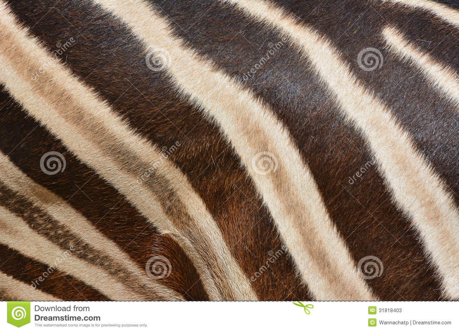 Real zebra pattern - photo#17