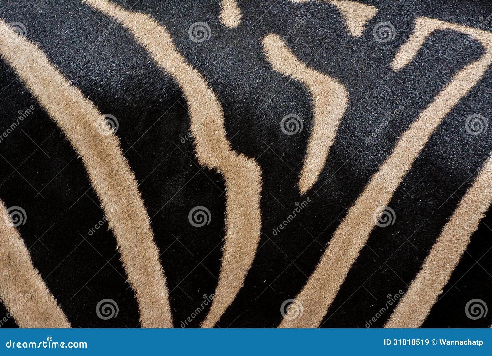 Real zebra pattern - photo#13