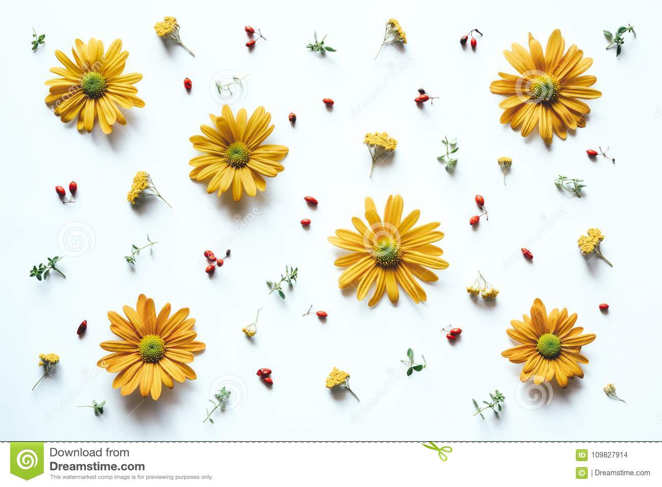 Pattern With Yellow Flowers Stock Photo Image Of Decor Colored