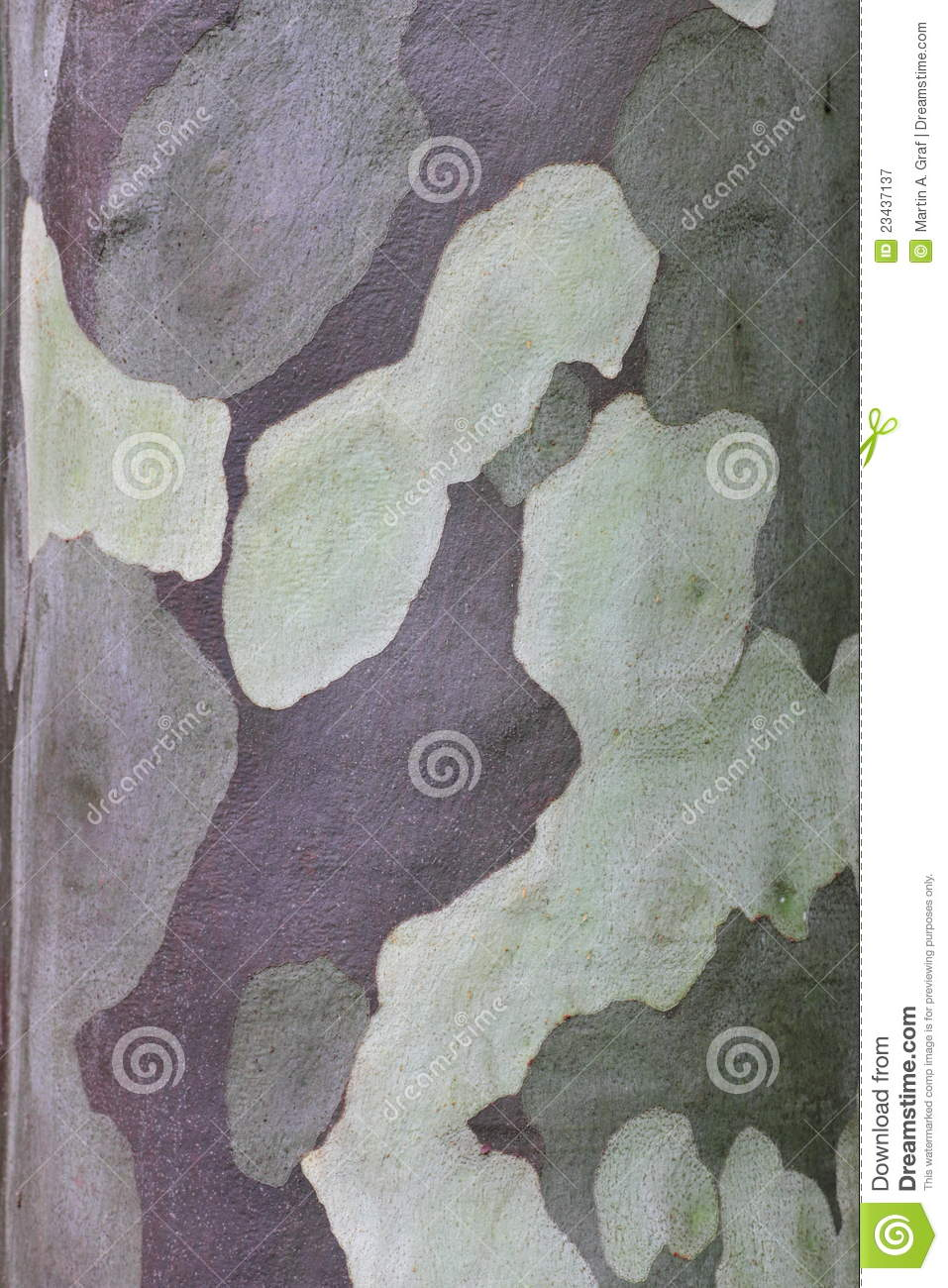 patterned gum tree bark royalty free stock photography