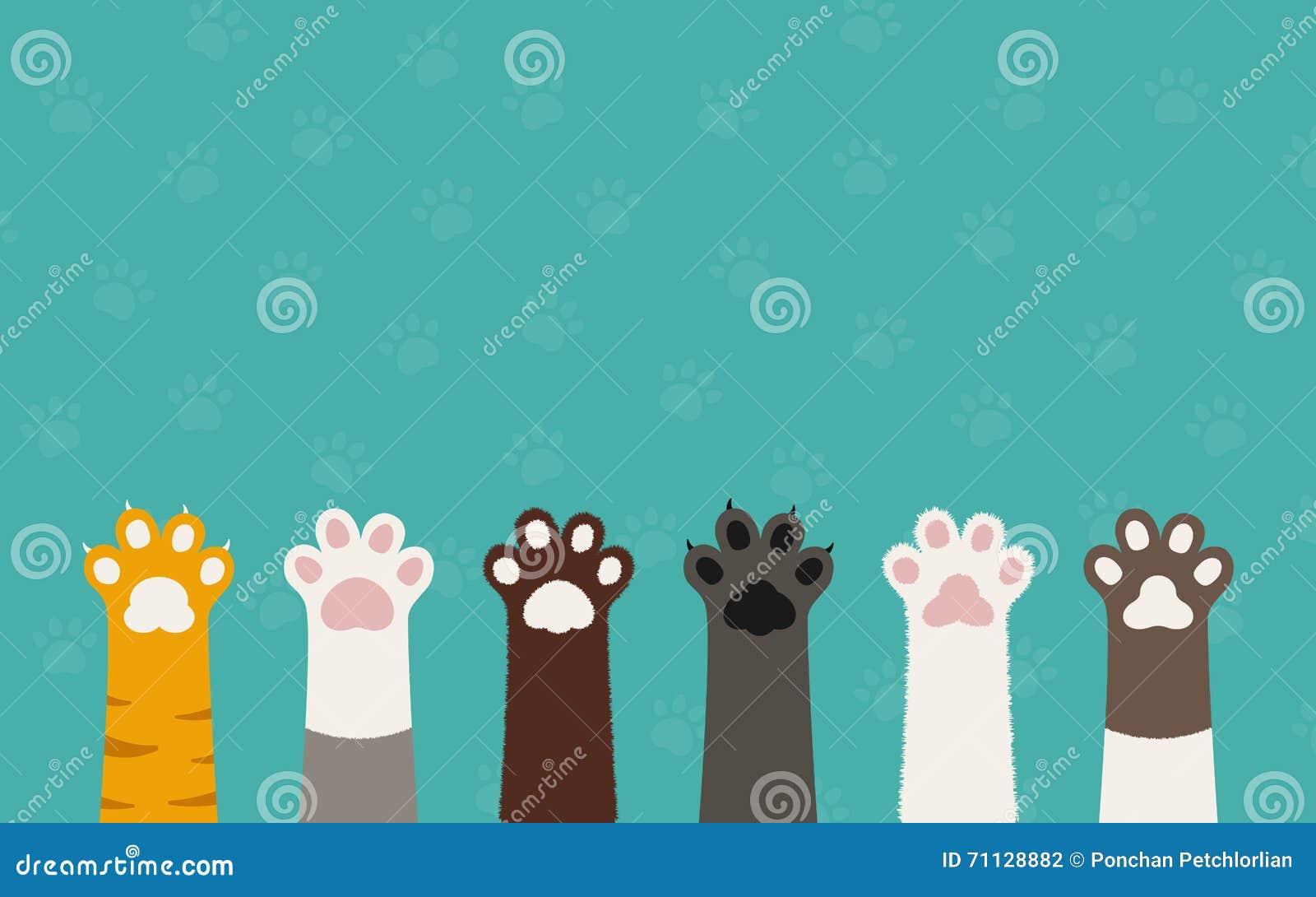 Pattes de chat
