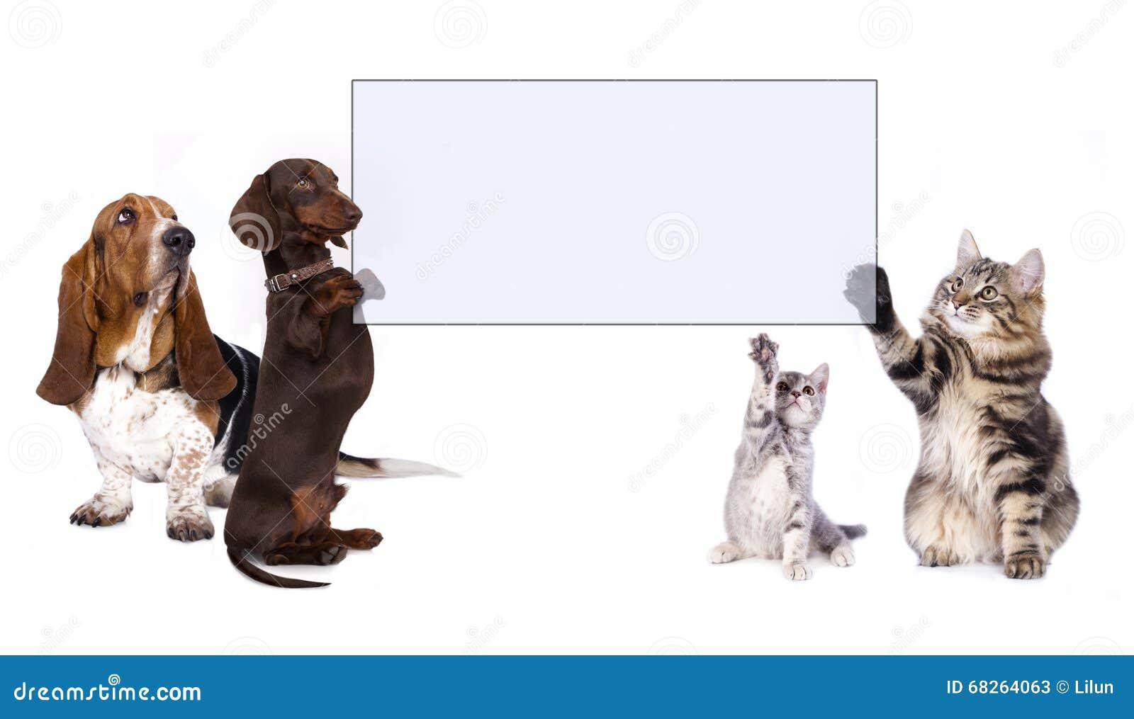 Pattes de chien tenant la bannière