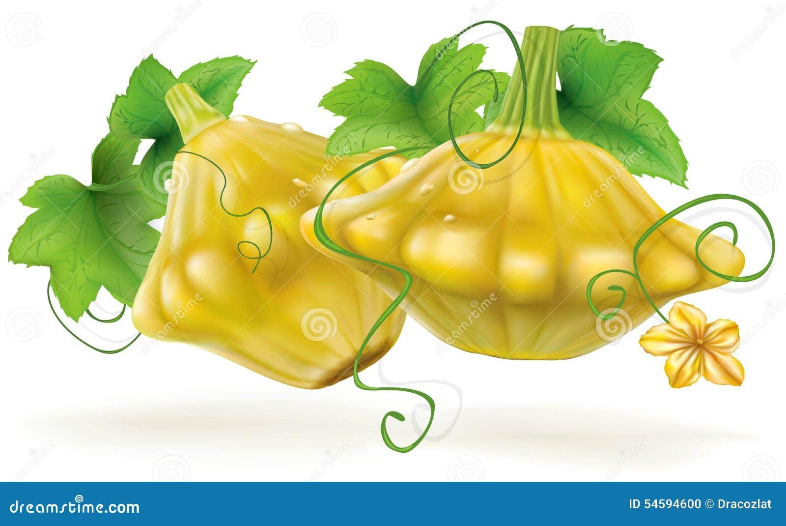 Line Drawing Zucchini : Cucurbitaceae cartoons illustrations vector stock