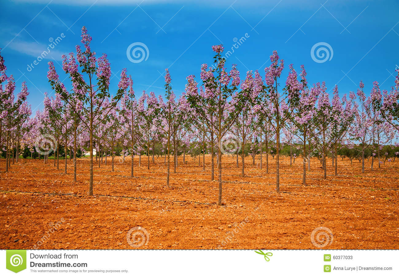 Paulownia plantation business plan
