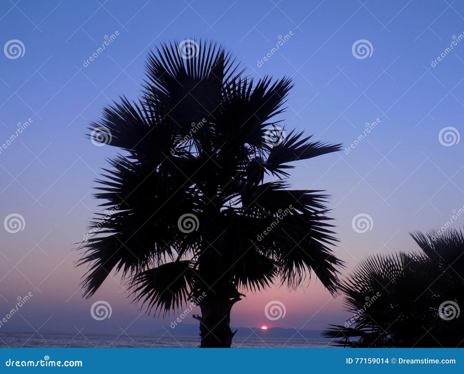 Paume au coucher du soleil près de la mer