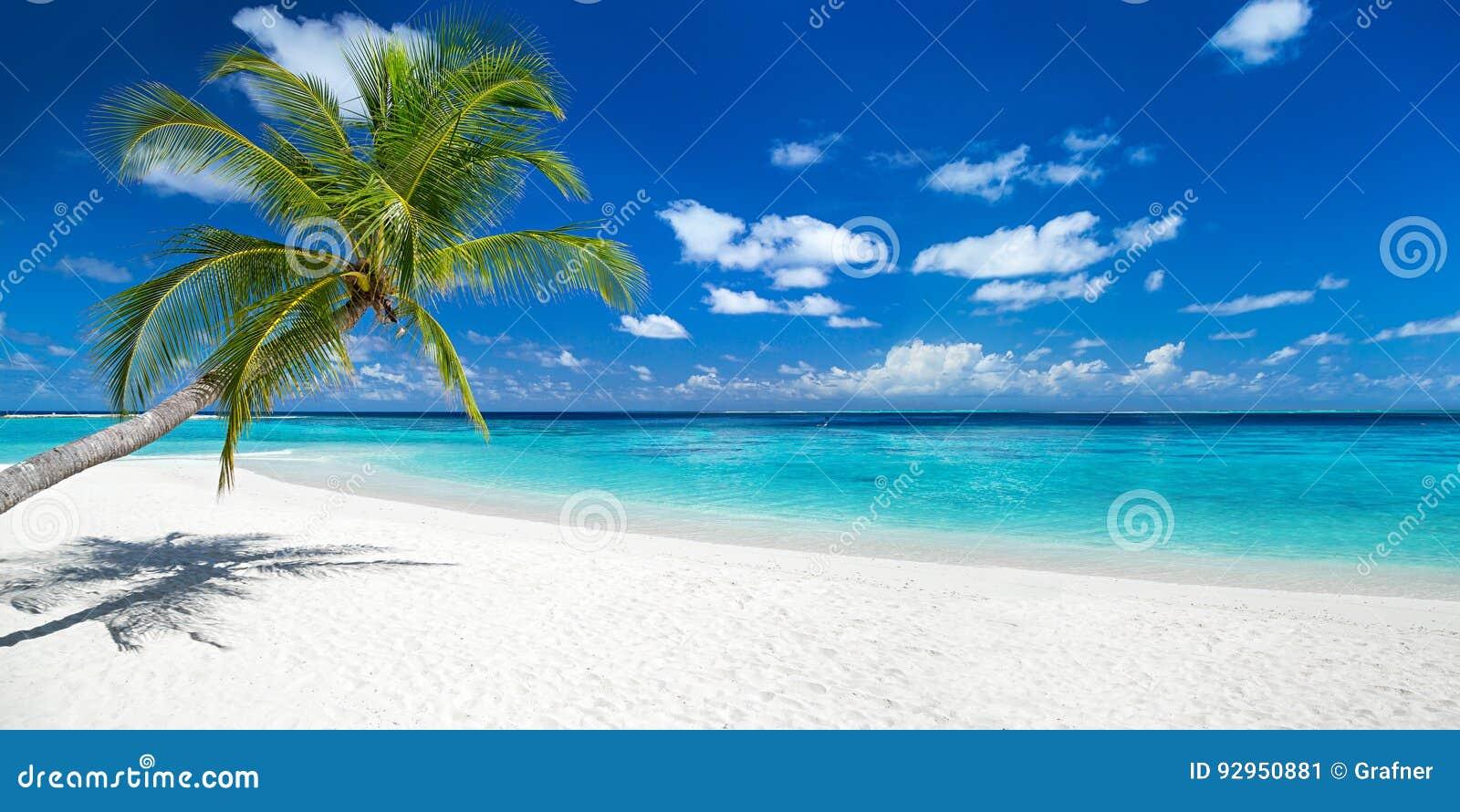 Paume de Cocos sur la plage tropicale de panorama de paradis