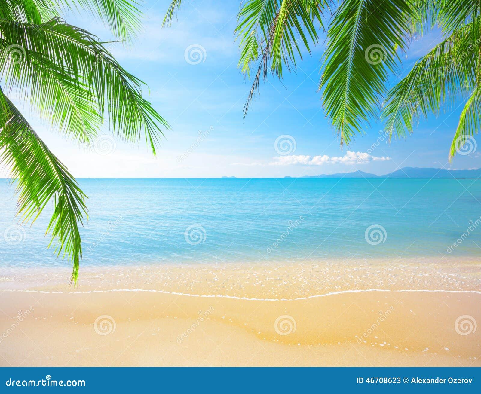 Paume et plage tropicale