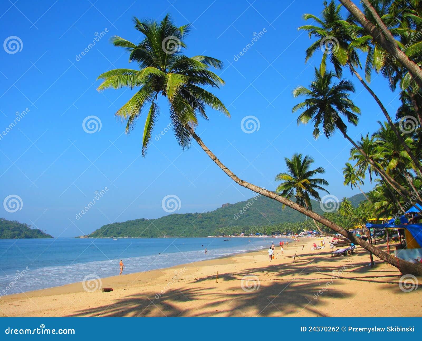Paume incurvée sur la plage de Palolem, Goa, Inde
