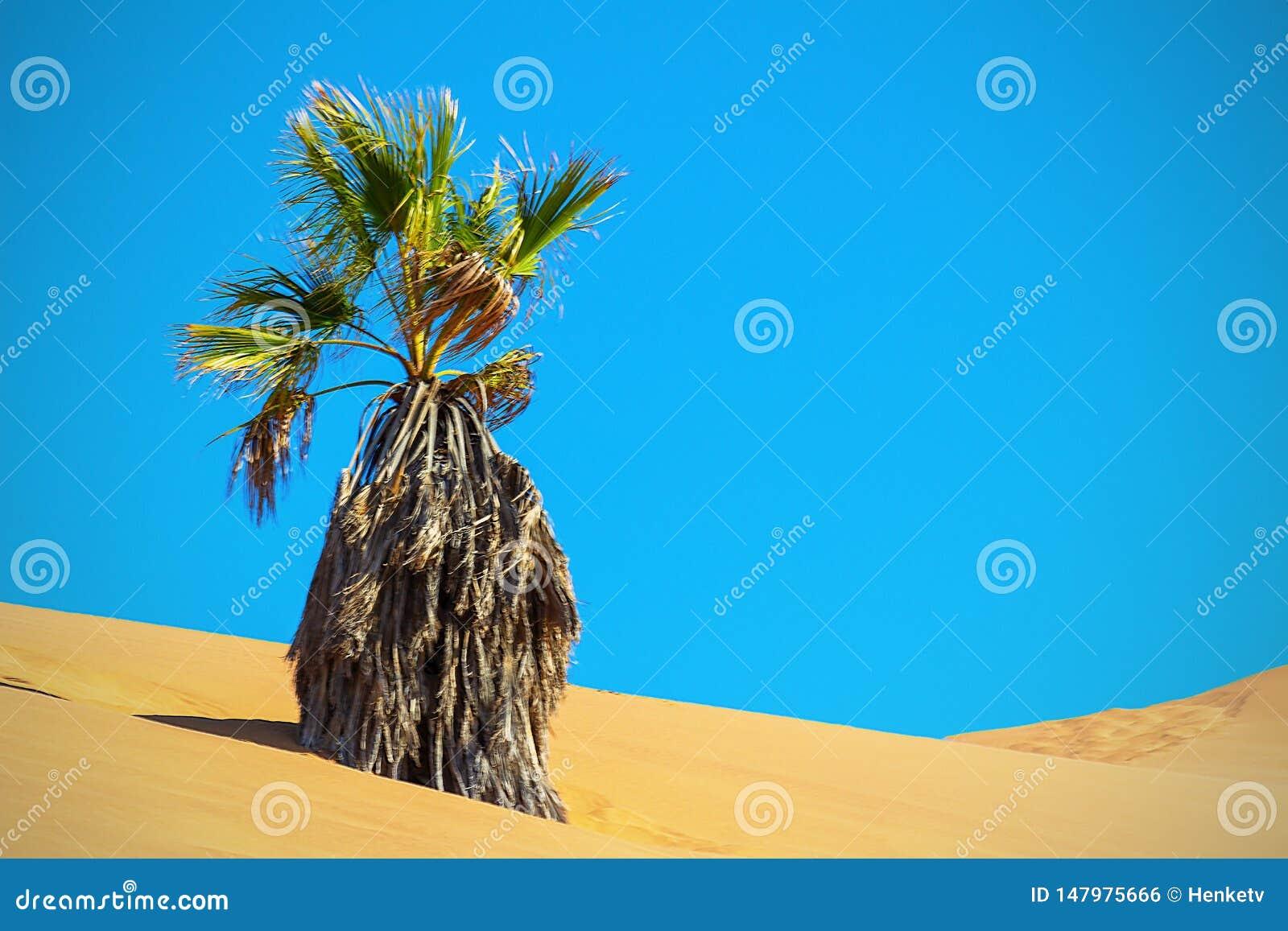 Paume s?che dans la dune de sable D?sert de Namib