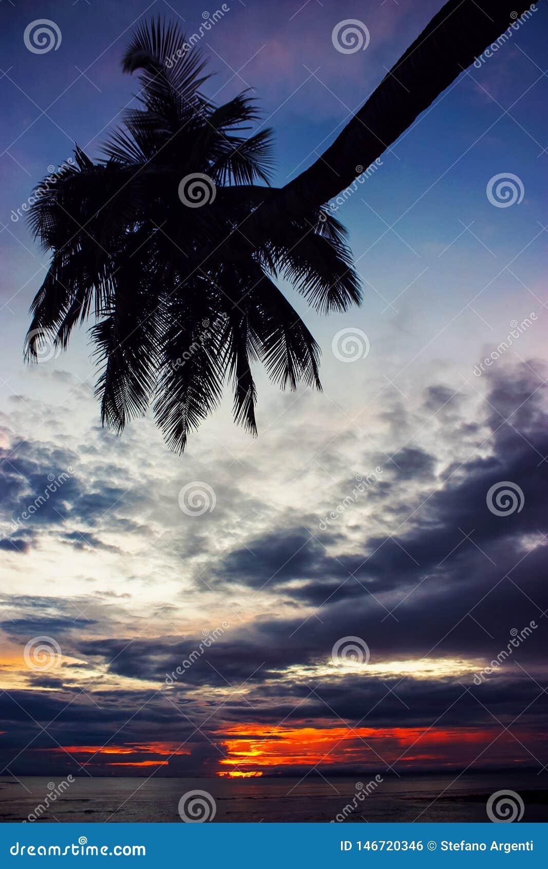 Paume sur la plage pendant le coucher du soleil nuageux