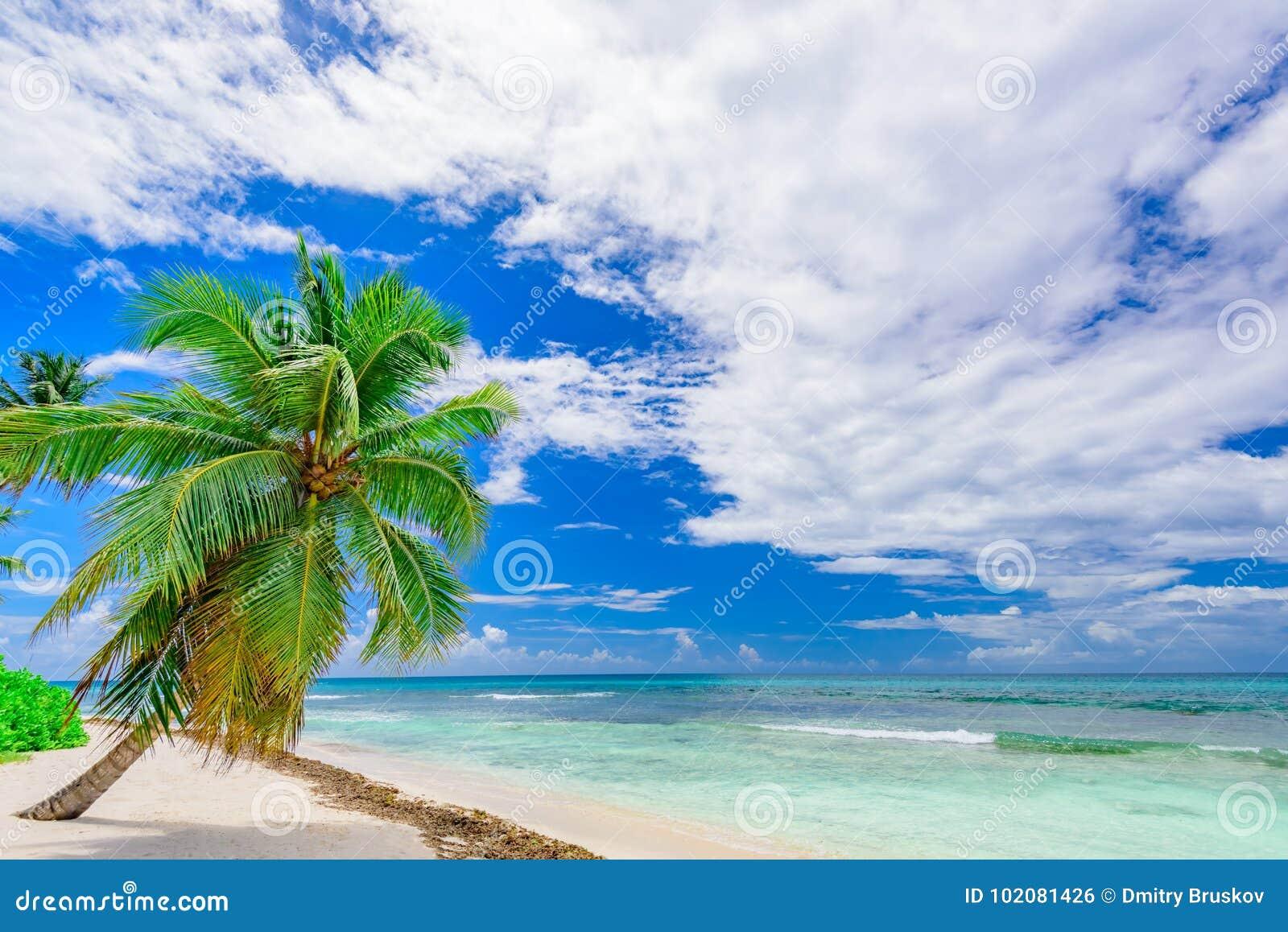 Paume tropicale de plage de paradis la mer des Caraïbes