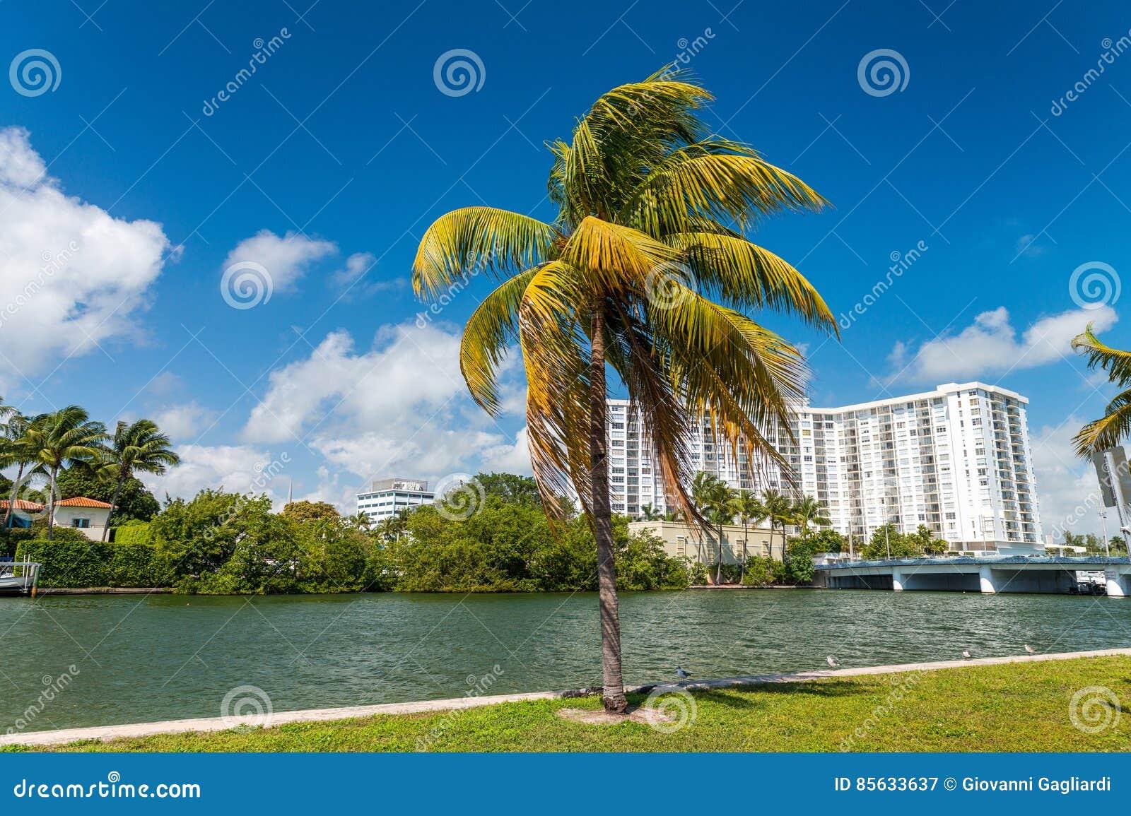 Paumes et bâtiments de Miami Beach - Floride, Etats-Unis